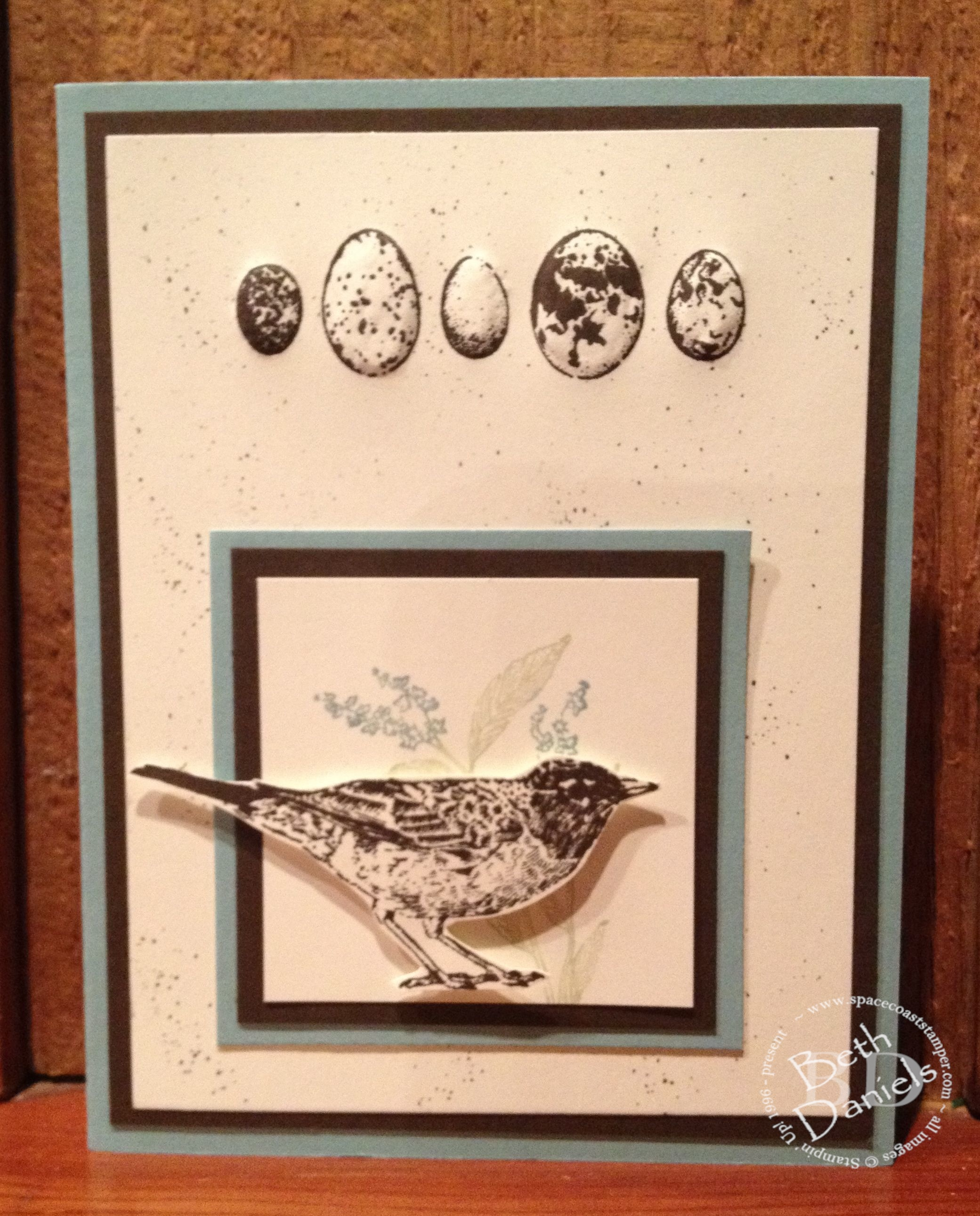 bird-eggs