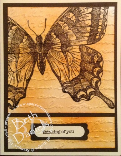 swallowtail-jpg