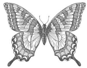 Swallowtail Clear - $13.95     Wood - $17.95
